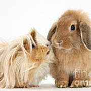 Guinea Pig And Rabbit Art Print