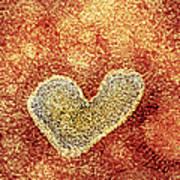 H5n1 Avian Influenza Virus Particle, Tem Art Print