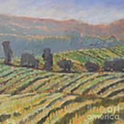 Hillside Vineyard Art Print by Kip Decker