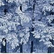 Hoarfrost On Trees In Winter, Birds Art Print