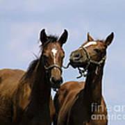 Horse Foul Play Iv Art Print