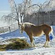 Horse On Maine Farm After Snow And Ice Storm Art Print