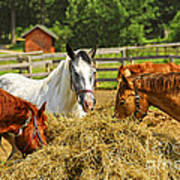 Horses At The Ranch Art Print by Elena Elisseeva