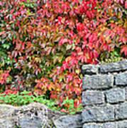 Hot Autumn Leaves 02 Art Print