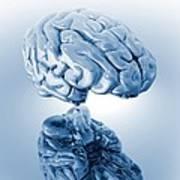 Human Brain, Artwork Art Print by Victor Habbick Visions