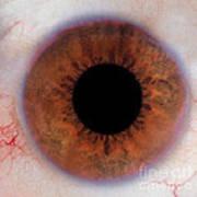 Human Eye Art Print