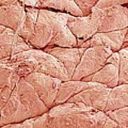Human Skin, Sem Art Print