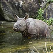 Indian Rhinoceros Rhinoceros Unicornis Art Print