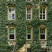 Ivy League Art Print by John Greim