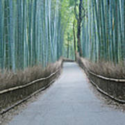 Japan Kyoto Arashiyama Sagano Bamboo Art Print by Rob Tilley