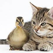 Kitten And Duckling Art Print