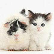 Kitten And Guinea Pig Art Print