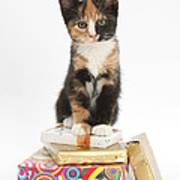 Kitten On Packages Art Print
