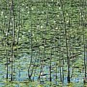 Lilly Pond Art Print by John Greim