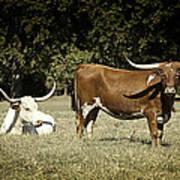Longhorn Cows Ressting Art Print by M K  Miller