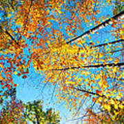 Looking Up At All The Colors Art Print
