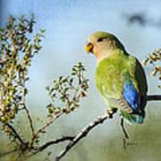 Lovebird  Art Print