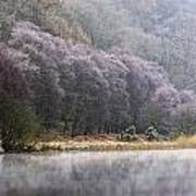 Lower Lake, Glendalough, County Art Print