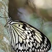 Magical Butterfly Art Print