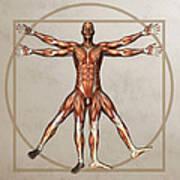 Male Musculature, Artwork Art Print