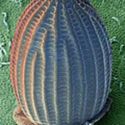Monarch Butterfly Egg, Sem Art Print