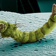 Mosquito Larva, Sem Art Print