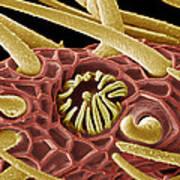 Moth Antenna, Sem Art Print