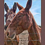 Mule Wink Art Print