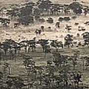 Ngorongoro Crater, Tanzania, Africa Print by Carson Ganci