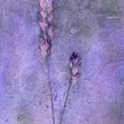 Orchard Grass Art Print