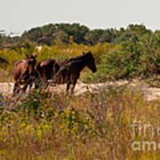 Outer Banks Horses Art Print