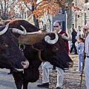 Oxen And Handler Art Print