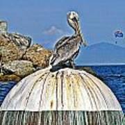 Pelican Power Art Print
