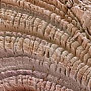Petrified Wood, Sem Art Print