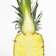 Pineapple Ananas Comosus Art Print
