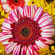 Pink And Yellow Mums Art Print