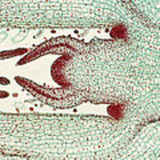 Plant Anatomy Art Print