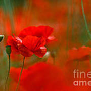 Poppy Flowers 02 Art Print
