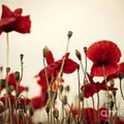 Poppy Flowers 03 Art Print