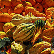Pumpkins And Gourds Art Print by Elena Elisseeva