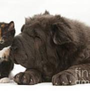 Pup & Kitten Making Friends Art Print
