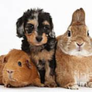 Pup, Guinea Pig And Rabbit Art Print