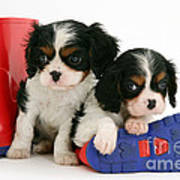 Puppies With Rain Boots Art Print