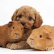 Puppy And Guinea Pigs Art Print