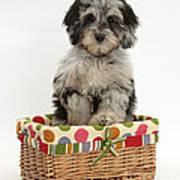 Puppy In A Basket Art Print