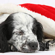 Puppy Sleeping In Christmas Hat Art Print