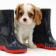Puppy With Rain Boots Art Print