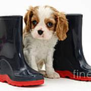 Puppy With Rain Boots Art Print by Jane Burton