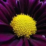 Purple Jewel Art Print