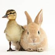 Rabbit And Duckling Art Print